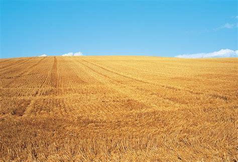 ana y leti: Agricultura extensiva de secano