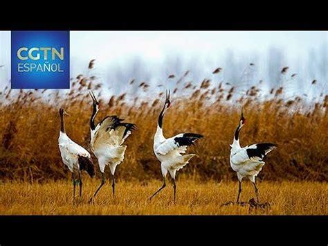 Añaden santuarios de aves migratorias de China a la lista ...