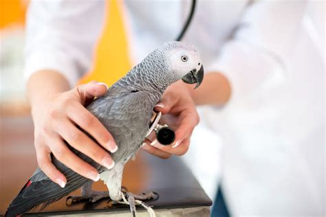 Anaesthesia in exotic pets—managing the risks   Vet ...