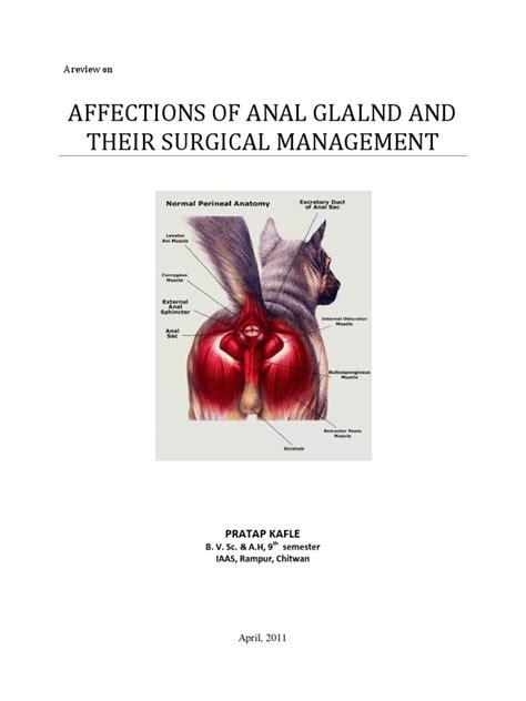 Anal Sac Diseases | Adenocarcinoma | Adenoma