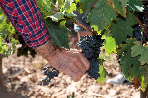 Análisis de un sector: Rioja 4.0 , el quinto y más amplio ...
