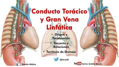 Anatomía   Conducto Torácico, Gran Vena Linfática y ...
