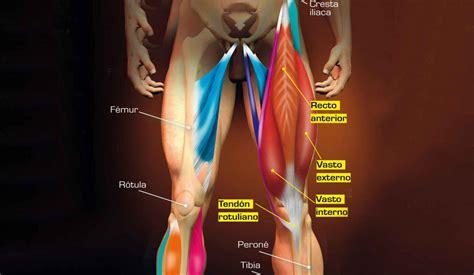 Anatomía de los músculos de la rodilla. Conoce sus ...