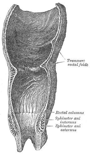 Anatomía del canal anal   AnSRo