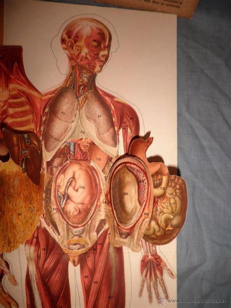 anatomia del cuerpo masculino y femenino   año   Comprar ...
