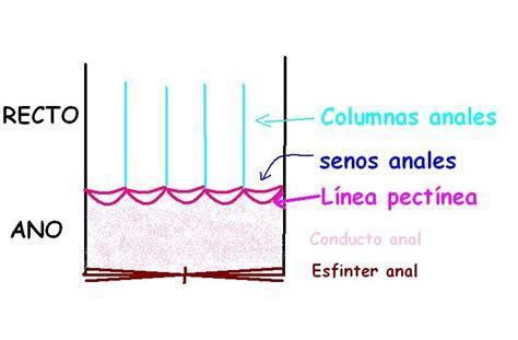 Anatomía UNAM: RECTO CONDUCTO ANAL