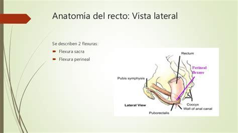 Anatomía y fisiología de recto y ano