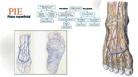 Anatomia y semiologia venosa