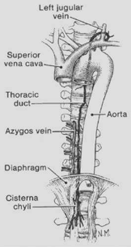 Anatomy of the Thoracic Duct and Chylothorax | Thoracic Key