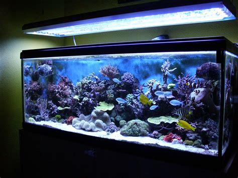 ANGEL WEB   Peceras Agua Salada | Home ideas | Aquarium ...