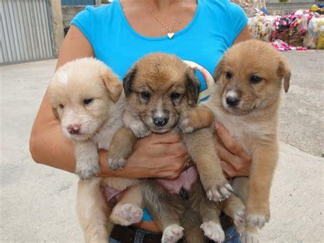 Ángeles abandonados, animales sin hogar: Valencia Cachorro ...