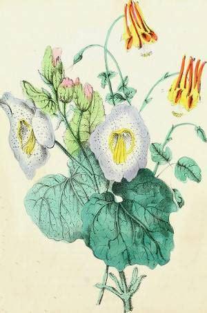 Angiospermas   plantas con flores con máxima evolución del ...