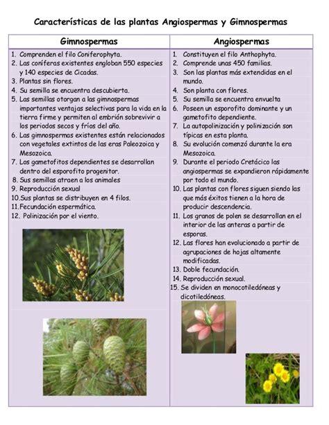 Angiospermas y ginmospermas botanica