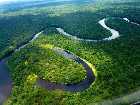 Animais em Extinção na Floresta Amazônica   Toda Matéria