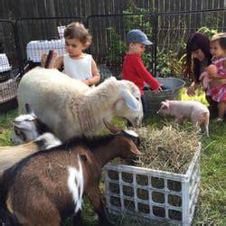 Animal Affair Traveling Petting Zoo   Festivals   Rehoboth ...