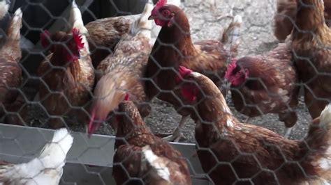 Animal Breeding and Genetics | WageningenX on edX   YouTube
