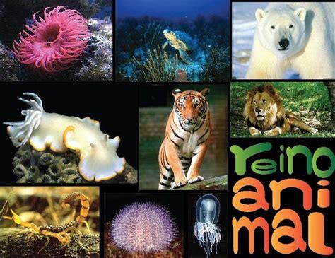 Animal   EcuRed