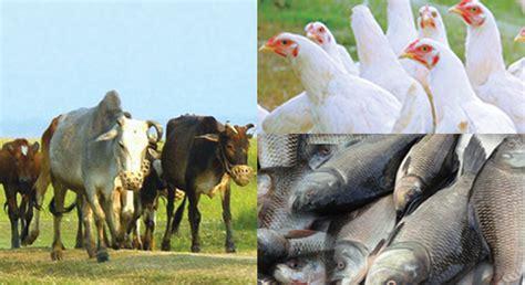 Animal Health   ACI Limited