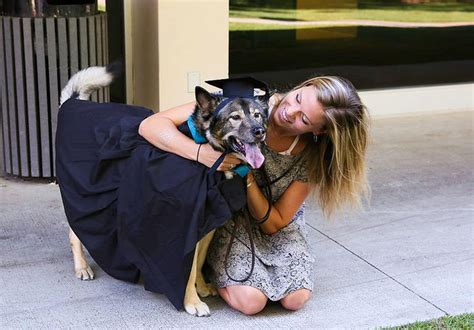 Animal house? More colleges are saying yes to dogs and ...