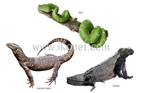 animal kingdom > reptiles > examples of reptiles image ...