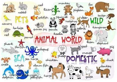 Animal Vocabulary | You can learn!