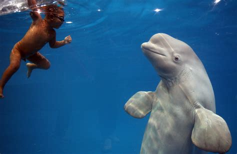 Animal You: Beluga Whale