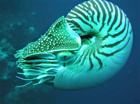 AnimalBlog: Animales marinos