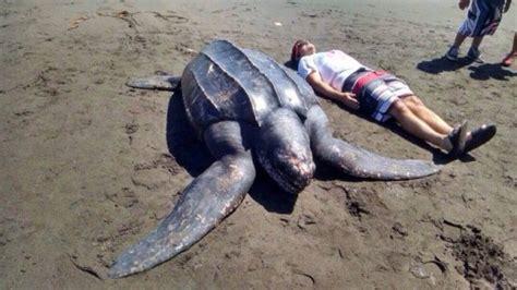 animales acuaticos mas grandes del mundo: de mar y río