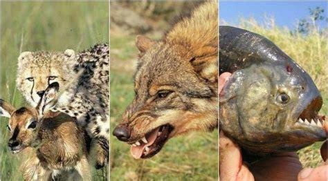 ANIMALES CARNÍVOROS   50 ejemplos, características y tipos