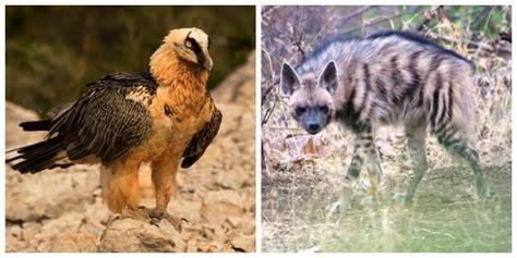Animales carroñeros: características y ejemplos   Lifeder