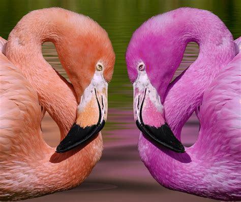 Animales Color Rosa | Diario de Mascotas