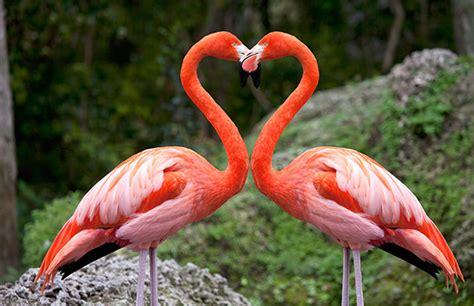 Animales curiosos: ¿Por qué los flamencos son de color rosa?