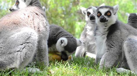 Animales de BIOPARC combaten el calor con refrescantes ...