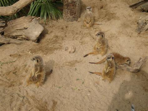 Animales del Zoo de Barcelona | fotos de Animales