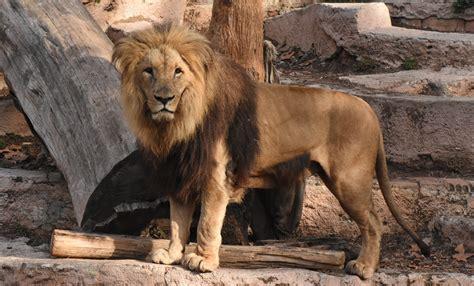 Animales Del Zoo De Barcelona   SEONegativo.com