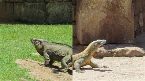 Animales del zoo de Fuengirola   YouTube