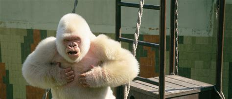 Animales emblemáticos | Zoo Barcelona
