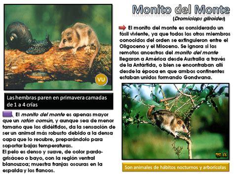 Animales En peligro: Argentina [Post ilustrativo]   Cie ...