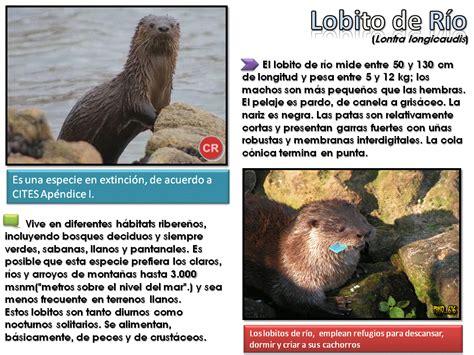 Animales En peligro: Argentina [Post ilustrativo ...