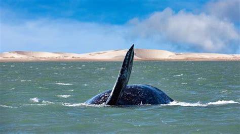 Animales en peligro: Los océanos se enfrentan a una ...