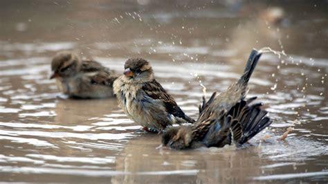 Animales: Esta es el ave más rara de España: solo queda ...