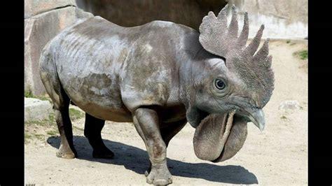 animales extraños y dinosaurios   YouTube