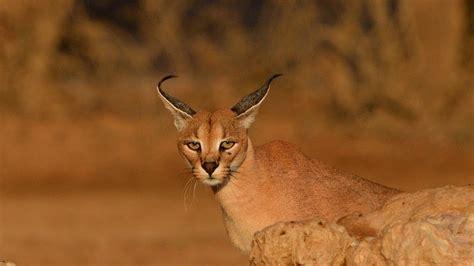 ANIMALES  grandes parques de africa Kgalagadi |Grandes ...