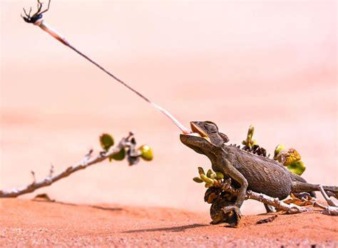 Animales insectívoros: características y ejemplos   Lifeder