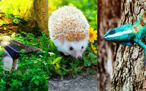 ANIMALES INSECTÍVOROS | Ejemplos, características y más!