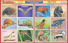 animales insectivoros y omnivoros  con imágenes ...