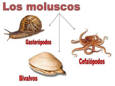 animales invertebrados, grupos y ejemplos   Buscar con ...
