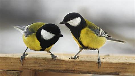 Animales: Los pájaros enamorados prefieren estar con su ...
