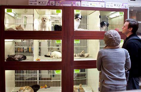 Animales: Madrid quiere un cuidador nocturno en cada ...