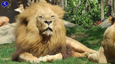 Animales magniíficos del Zoo Bioparc de Valencia   YouTube